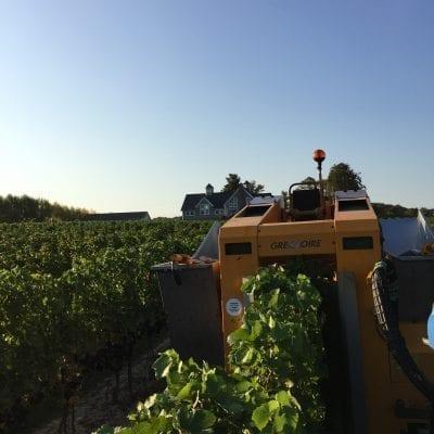 M-Cellars-Harvester
