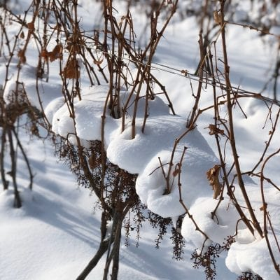 M-Cellars-Vineyard-Winter-Snowfall