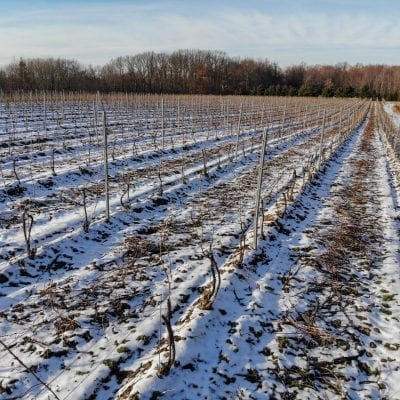 M-Cellars-Winter-Vineyard-Drone