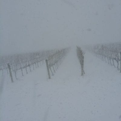 M-Cellars-Vineyard-Winter-Snowstorm