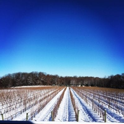 M-Cellars-Vineyard-Winter