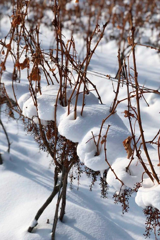 winter-at-m-cellars-vineyard